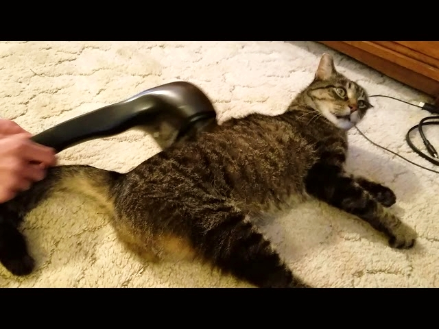 Cat's Reaction to The Massager