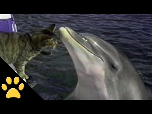 Dolphin Loves This Cat