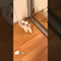Dog Does Cute Little Dance For Treats