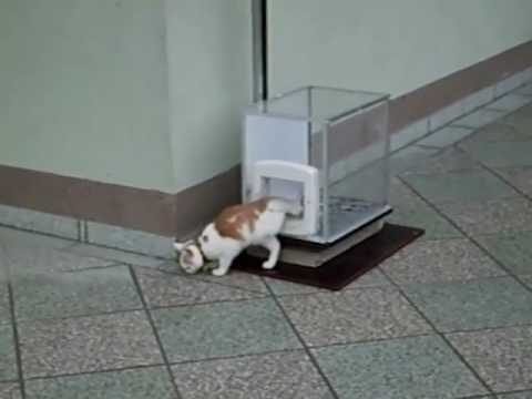 Amazing Cat Elevator with Safety Features