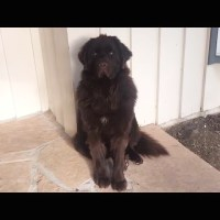 Dog is Upset Mom Left Home to Work But Quickly Forgives Her