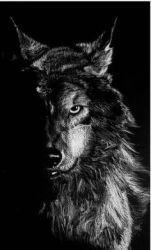 Angry Wolf Wallpaper Hd posted by Ryan Walker