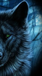 Angry Wolf Wallpaper posted by Samantha Tremblay