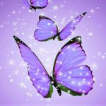 Beautiful Purple Butterfly Wallpaper Posted By Sarah Sellers