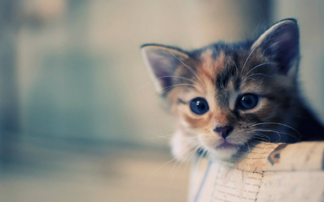 Background Cute Funny Cat Wallpaper