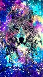 Galaxy Wolves posted by Samantha Johnson