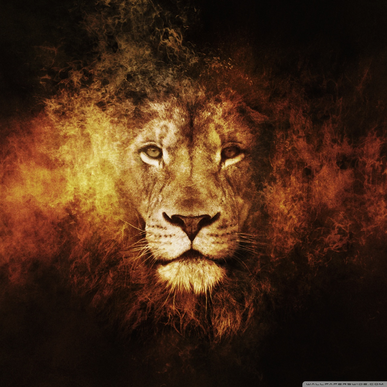 Lion Hd Wallpapers Posted By John Sellers