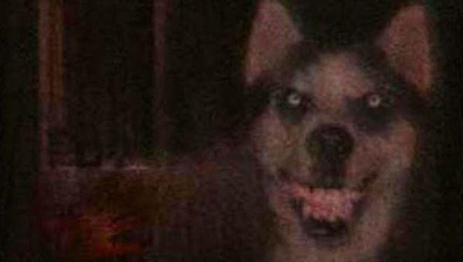 Smile dog smiling