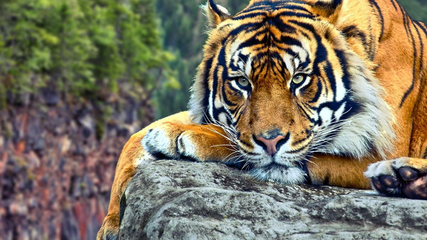 Wild Animals Hd Wallpapers Posted By Ryan Anderson
