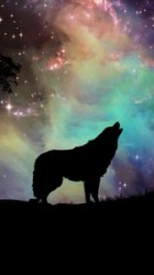 Wolf Wallpaper Iphone 6 posted by John Walker