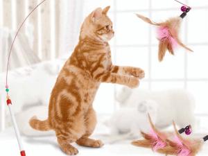 Kattenhengel met veren