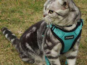 Kattenharnas met Lijn