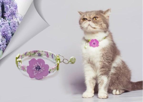 Kat draagt kattenhalsband met paarse bloem