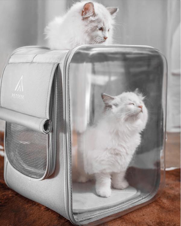 Kat in maat l van de kattenrugzak