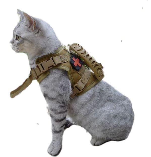 Verstelbaar Kattentuigje past goed op elke kat