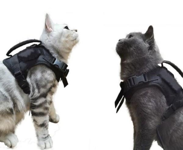 2 katten met het Verstelbaar Kattentuigje