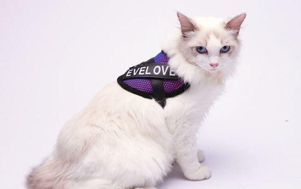 Kattenharnas met Leiband