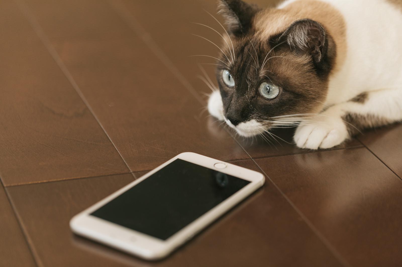cat9V9A9021_TP_V(2)