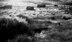 Jack Rabbit - Sarah Eakins - Kodak Technical Pan 35mm - Fujica ST750W