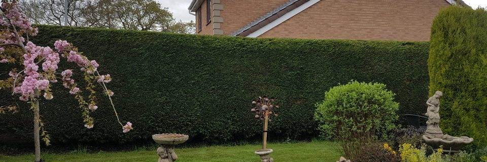 Have problem hedges or shrubs? We will maintain them to give you more light and a peace of mind.