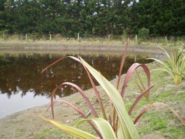 The final pond