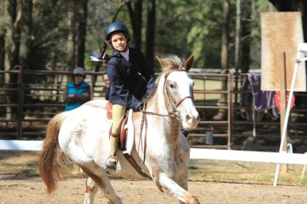 Cv Equestrian Flying Colors Horse Show February 5th 2014