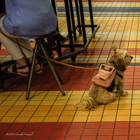 A Little Dog with a Pink Backpack
