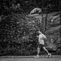 A Central Park Predator