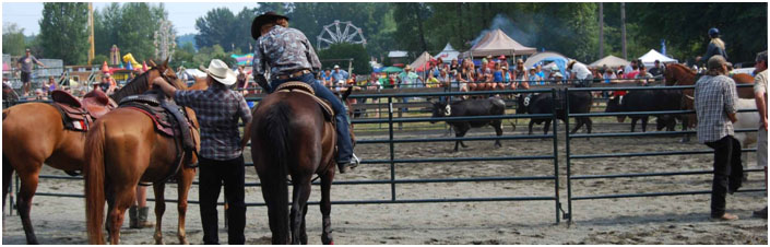 CVEX & North Vancouver Island Horse Association Cattle Sorting