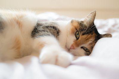 Campaña de esterilización felina 2020