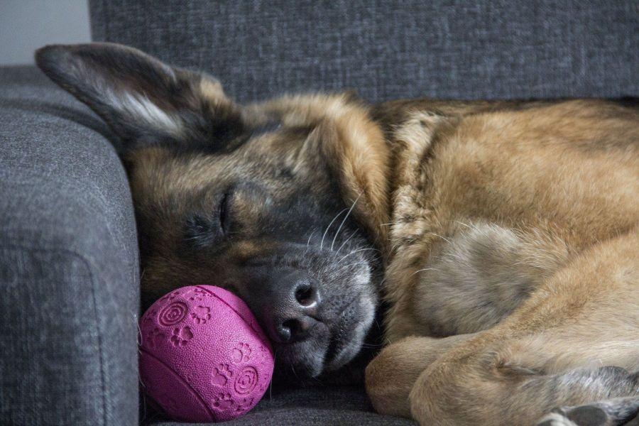 Campaña de esterilización canina