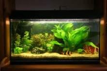 fish aquarium with lights and plants