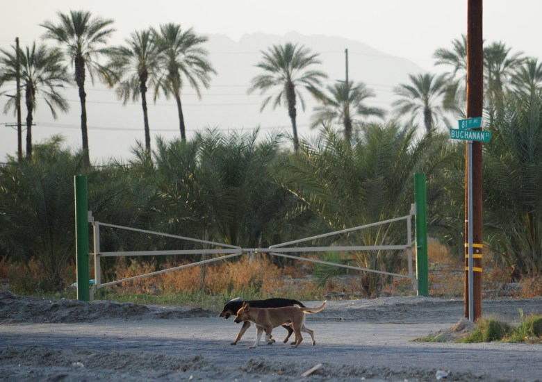 images/Lost Dogs of the Desert/lost-dogs-of-the-desert-2_8590102896_o