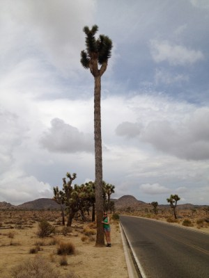 Kirsten Howard hugs the world's tallest Joshua tree, which stands 40 feet tall.