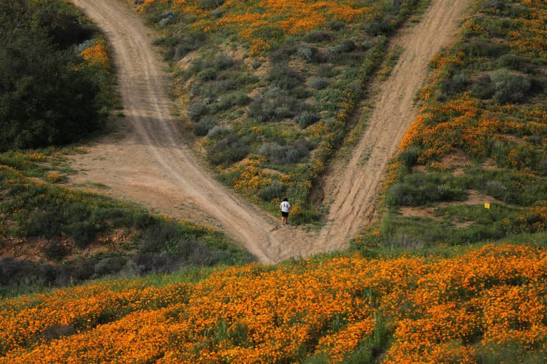 images/Wildflower Bloom/2017-03-15T025945Z_1_LYNXMPED2E04W_RTROPTP_4_CALIFORNIA-FLOWERS