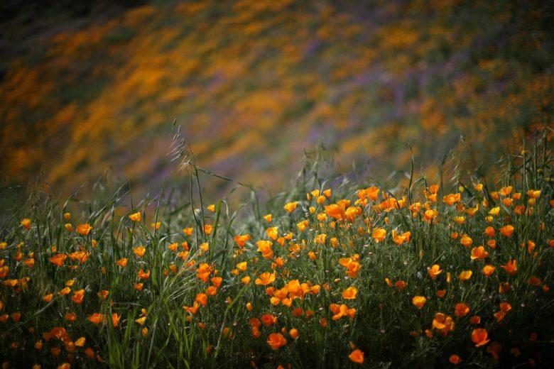 images/Wildflower Bloom/Flowers