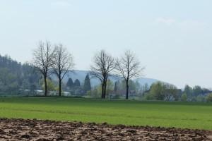 Bäume auf Feld