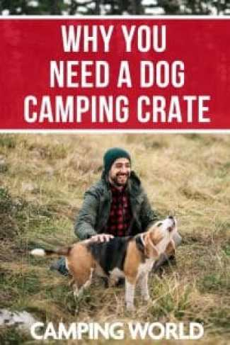 Why you need a dog camping crate