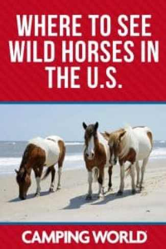 Where to see wild horses in the U.S.
