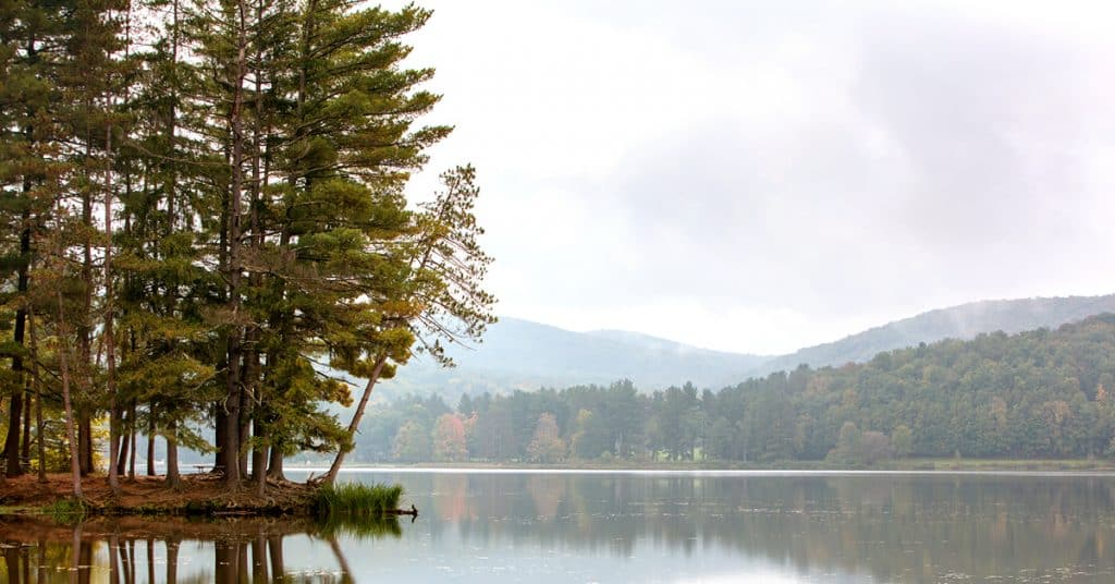 A beautiful forest and lake