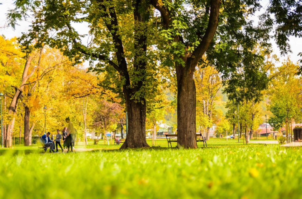 Save money with free experiences like parks, events, and gardens