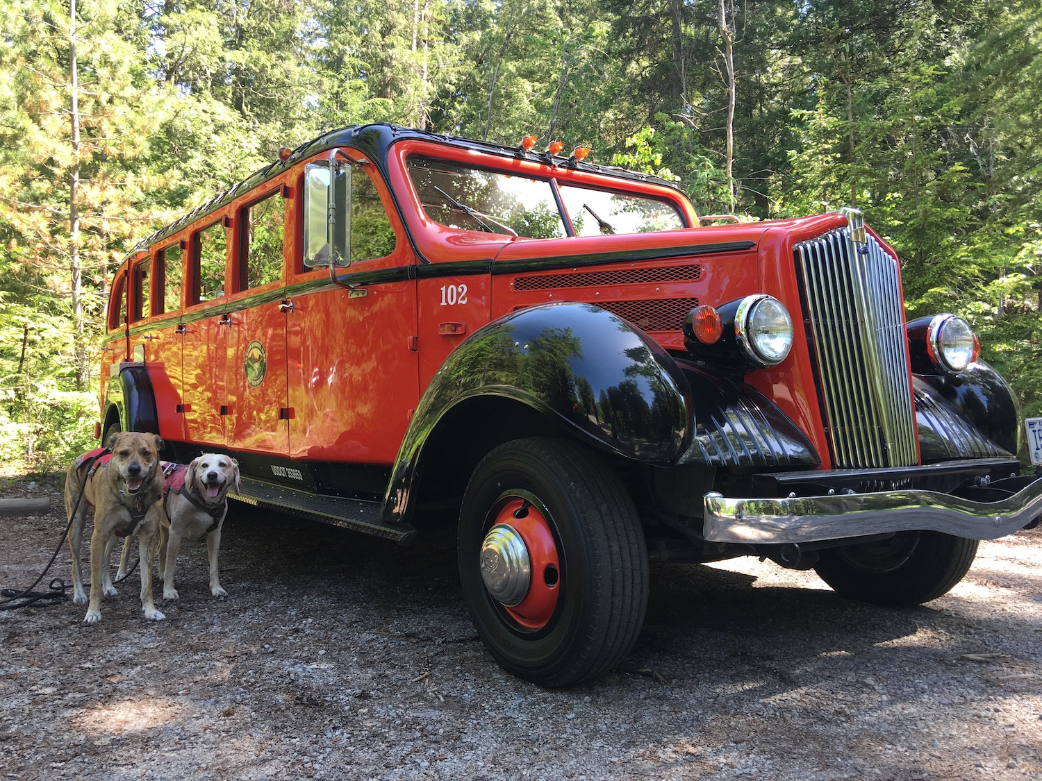 Glacier-National Park with dogs