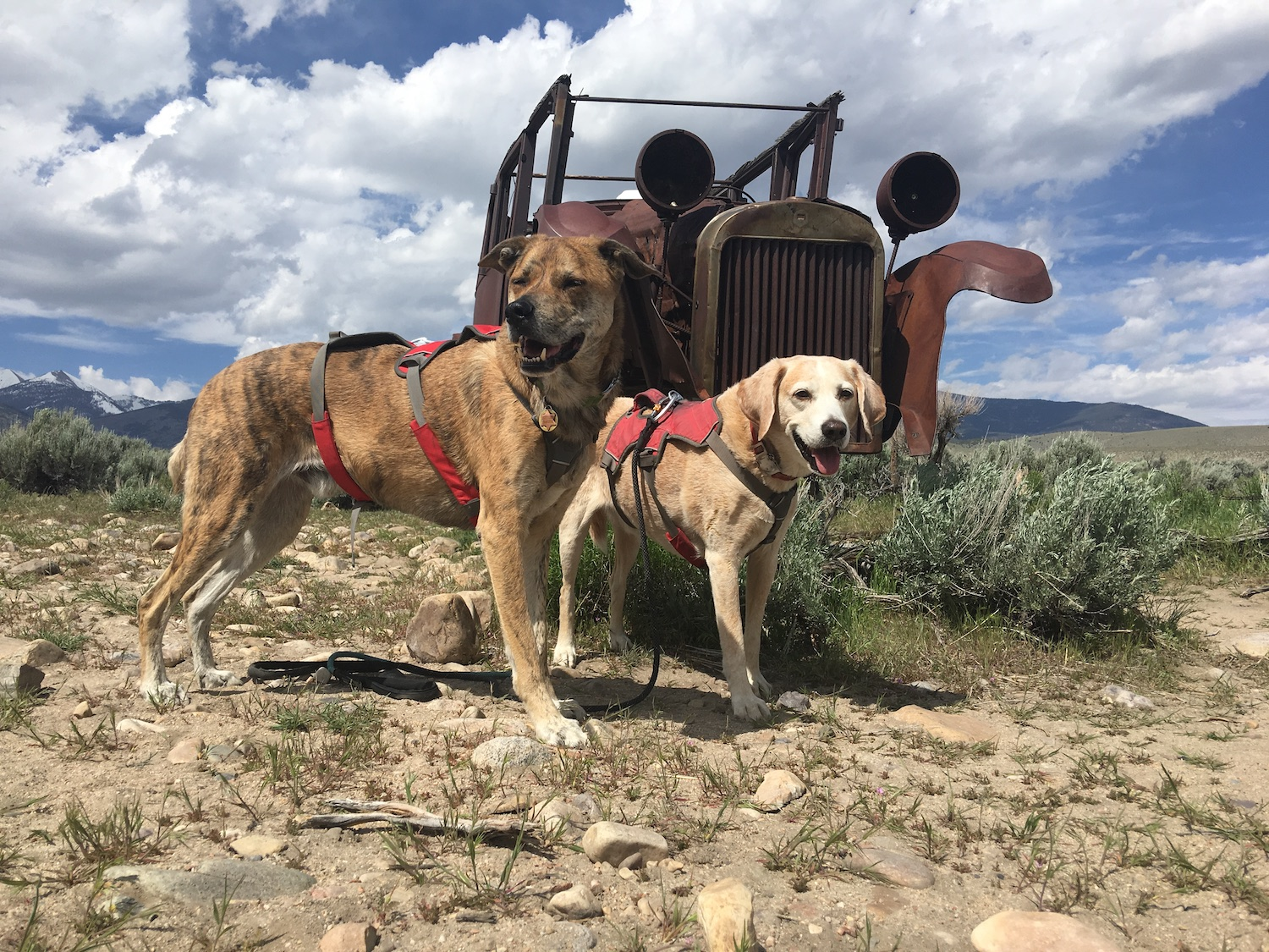 Great-Basin-National Park with dogs