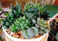 Succulents for Interior or Shade - CW Design and Landscaping