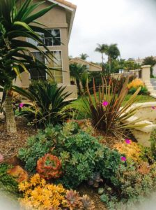succulent landscaping carlsbad