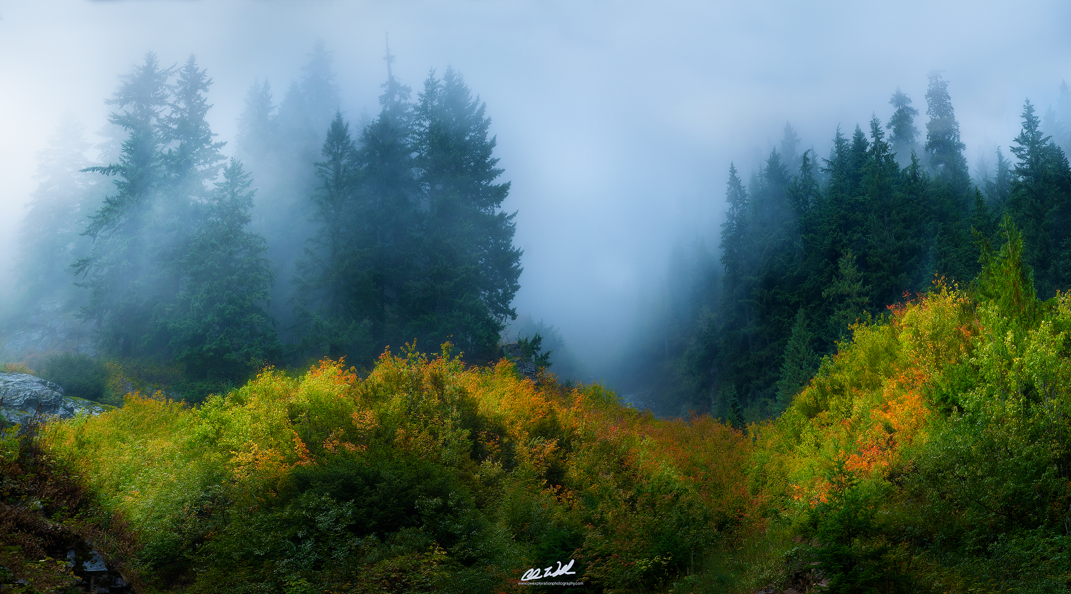 Wallpaper Sunrise At Fall Through The Mists Intimate Forest Scenes