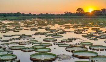 Sunset-over-the-Pantanal1