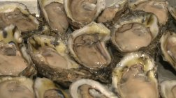 oysterrecycle1
