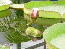 Jardín botánico Fundación Sales (18)