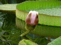 Jardín botánico Fundación Sales (19)